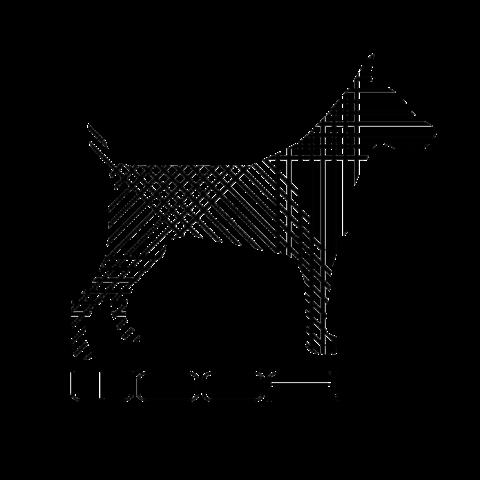 woofdogdesign